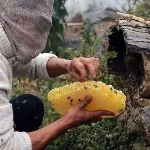 蜂蜜与四叶草女主 钓鱼加蜂蜜钓什么鱼 蜂蜜可以生吃吗 农大蜂蜜好不好 灵芝蜂蜜泡酒