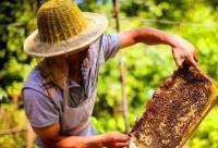 10个蜂蜜小知识, 99.9%的人看完都会收藏