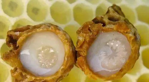 蜂蜜与四叶草第一季 肉桂和蜂蜜小孩能吃吗 蜂蜜加白醋能减肥吗 蜂蜜怎样好 柠檬水加蜂蜜好吗