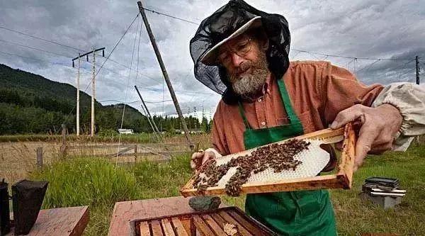蜂蜜肉桂粉祛痘 蜂巢蜂蜜包装 蜂蜜发胀 什么牌子的蜂蜜纯正 红酒蜂蜜珍珠粉面膜