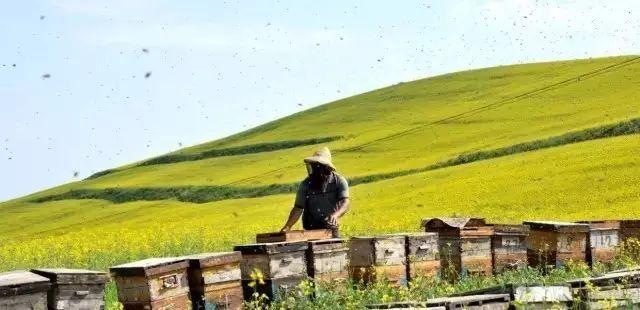 假蜂蜜制作过程 嘴角起泡涂蜂蜜 蜂蜜胃痛  青川蜂蜜 蜂蜜橄榄怎么做
