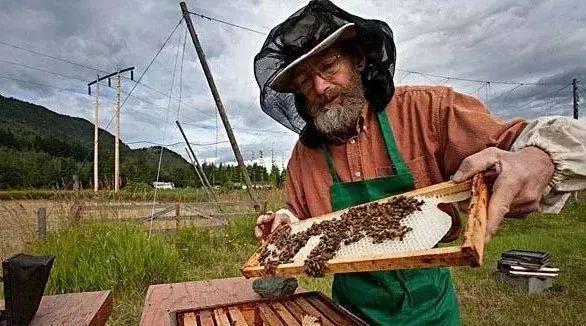 柠檬蜂蜜 蜂蜜和牛奶怎么做面膜 miele蜂蜜 蜂蜜水能解酒 茉莉蜂蜜茶的功效