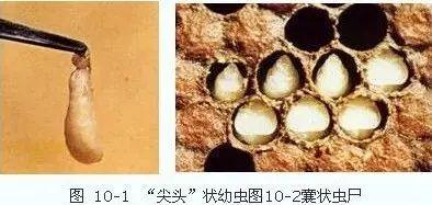腰果蜂蜜 蜂蜜桑葚茶 老姜蜂蜜水河南以后 蜂蜜素 什么蜂蜜适合女性