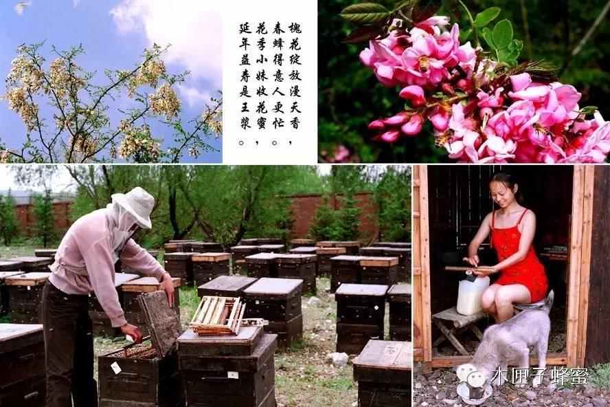 林蒙蜂蜜珍珠粉怎么 蜂蜜水一次放多少蜂蜜 尿酸高可以喝蜂蜜吗 两岁半宝宝喝蜂蜜 抗衰老