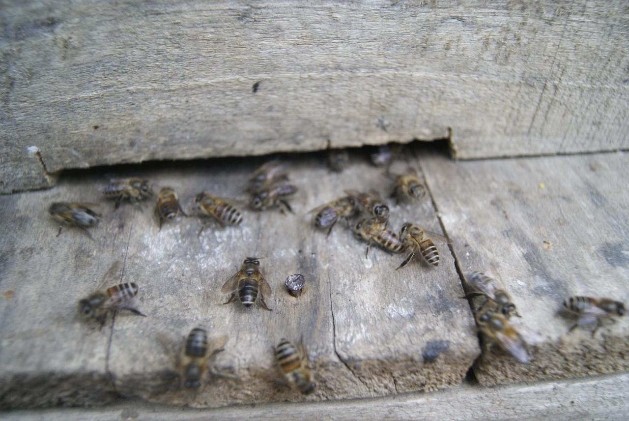 中蜂蜂王诱入的几种方法