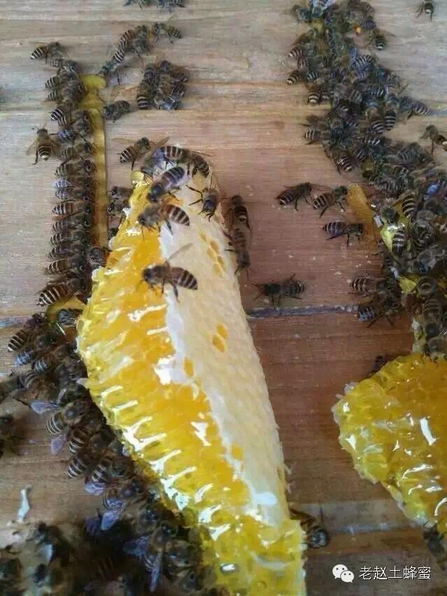 买不到好蜂蜜,只是你不懂!!!