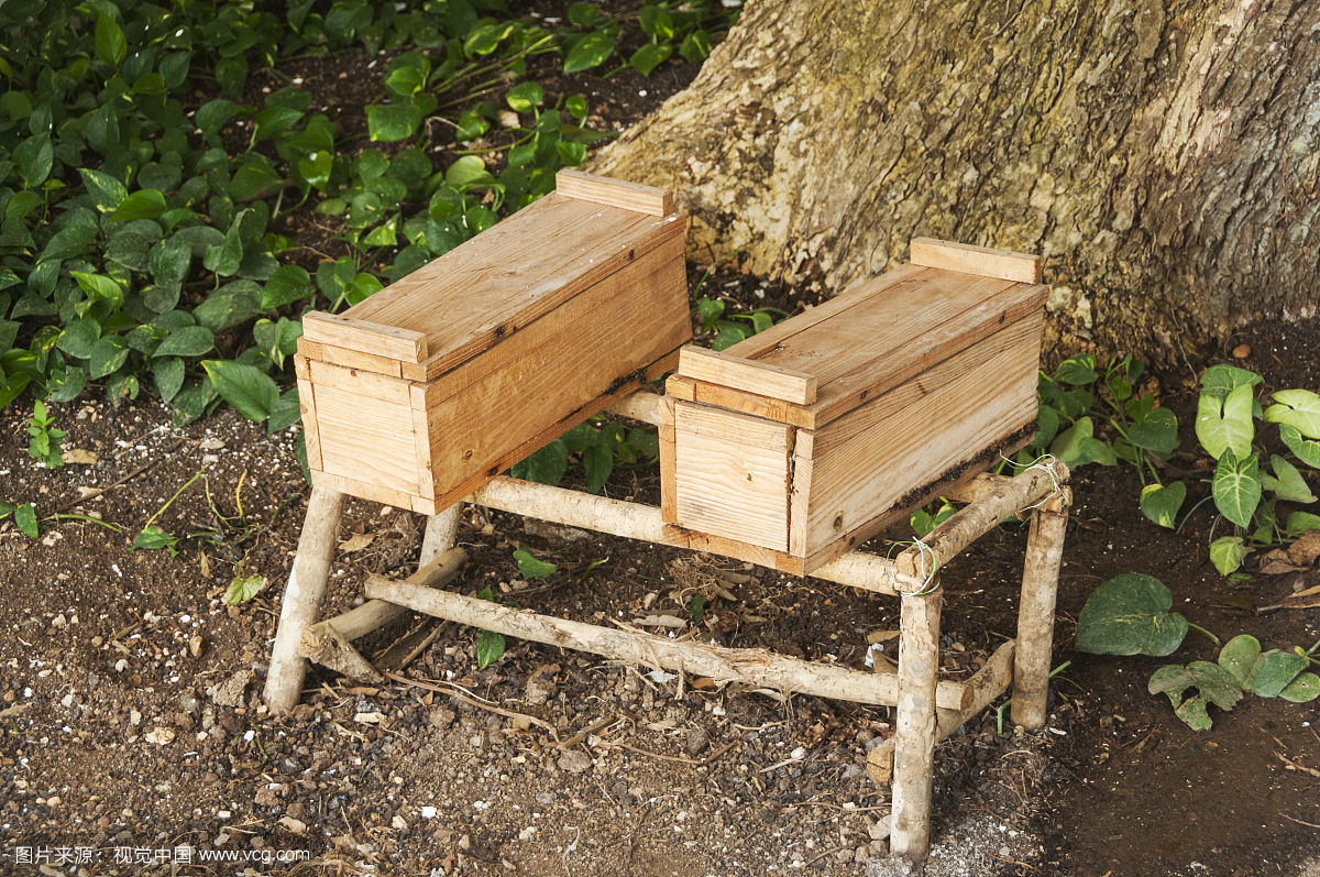 小叶增增生可以喝蜂蜜水吗 高端蜂蜜 咽炎什么蜂蜜 哪个牌子真蜂蜜 哺乳期妈妈喝蜂蜜