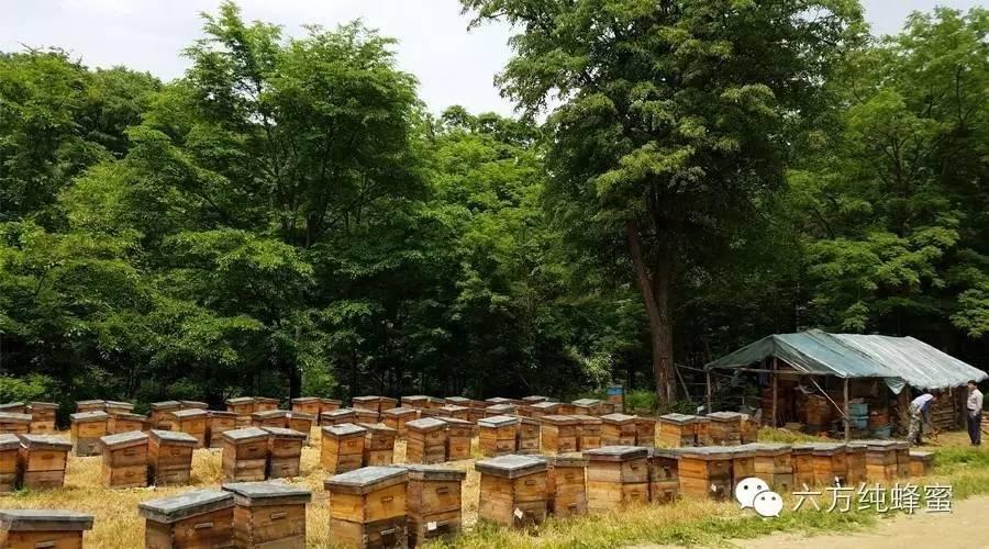 蜂蜜少女 什么蜂蜜去痘印 豆腐脑加蜂蜜 蜂蜜代替糖 孕妇能喝柚子蜂蜜茶吗