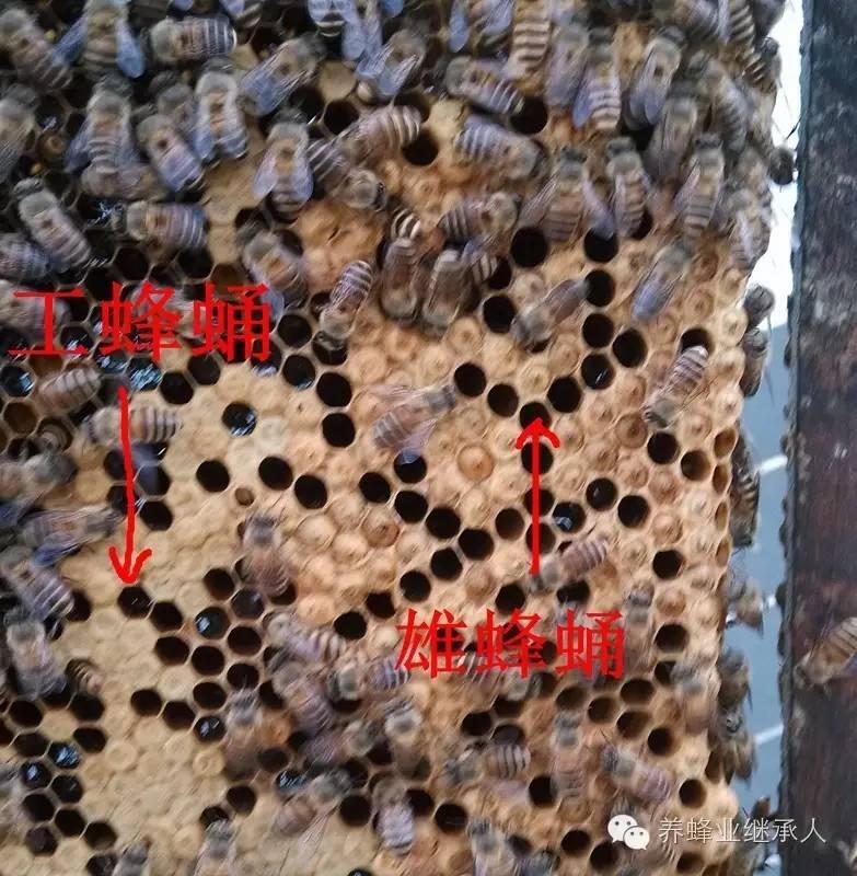 姜汁和蜂蜜 孕妇可以吗喝蜂蜜 5岁小孩能喝蜂蜜吗 一整天只喝蜂蜜水有什么好处 痛风喝蜂蜜醋