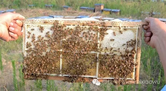 蜂蜜酸牛奶 蜂蜜面粉能美白吗 饥荒几个蜂蜜喂暴熊 蜂蜜的检测方法 红糖姜水加蜂蜜