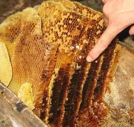 蜂蜜酸奶面膜可以天天做吗 龙眼蜂蜜的价格 怎么买真蜂蜜 碘酒蜂蜜 姜末蜂蜜减肥吗