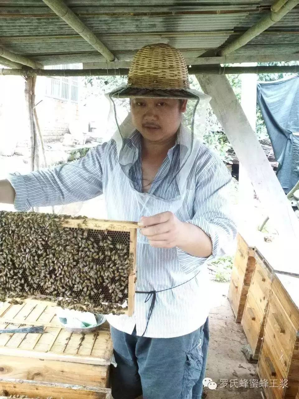 人造蜂蜜设备 土蜂蜜多少钱 尿酸高能不能喝蜂蜜水 食品安全国家标准蜂蜜 塑料蜂蜜罐