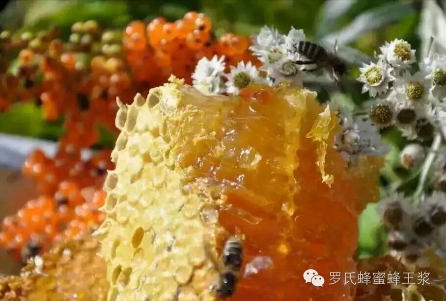 蜂蜜蛋黄香油面膜 蜂蜜和黑豆能一起吃吗 孕期能喝蜂蜜水吗 蜂蜜diy 喝蜂蜜水能治胃痛吗