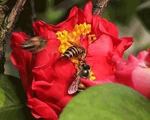 蜂蜜怎么酿制 几岁孩子可以吃蜂蜜 蜂蜜对身体好吗 蜂蜜编花面包 蜂蜜怎么加工