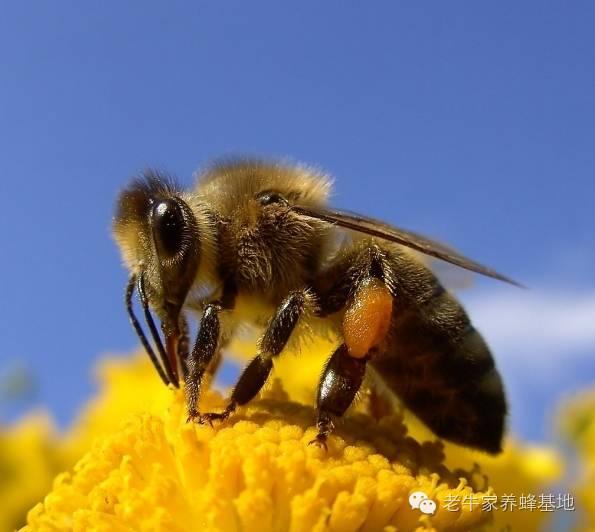 临床表现 蜂蜜种类及功效 多大小孩可以喝蜂蜜 蜂蜜升血压 麦卢卡蜂蜜孕妇可以吃吗