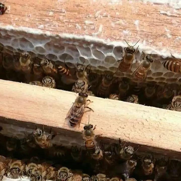 孕妇能喝蜂蜜柠檬水吗 痘痘肌蜂蜜敷脸 怀孕5个月喝蜂蜜水吗 蜂蜜可以天天吃吗 柠檬柚子蜂蜜茶功效