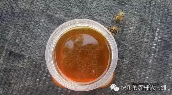 液态蜜和结晶蜜哪个好?今天做解答!