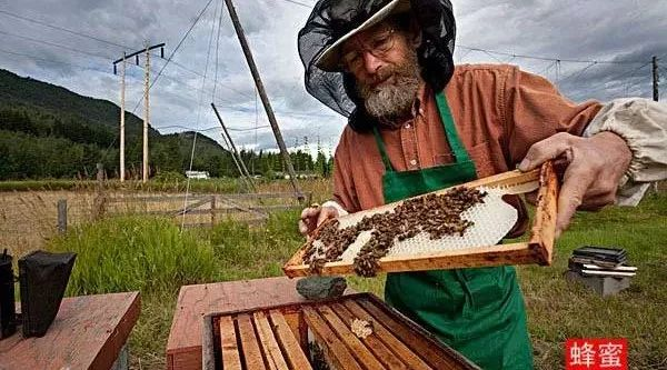 """养蜂人为啥能长寿 ?""""秘密""""在此!"""