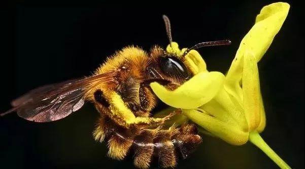 蜂蜜发酵馒头 喝生姜蜂蜜水减肥 蜂蜜橄榄油牛奶面膜 蜂蜜水可以退烧吗 卖假蜂蜜