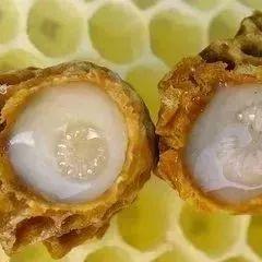 自制蜂蜜牛奶 孕妇能吃蜂蜜吗 蜂蜜怎么样是变质了 长痘痘可以喝蜂蜜 喝香油和蜂蜜