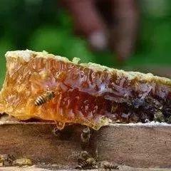 蜂蜜来保护心血管,蜜友们学好啦!