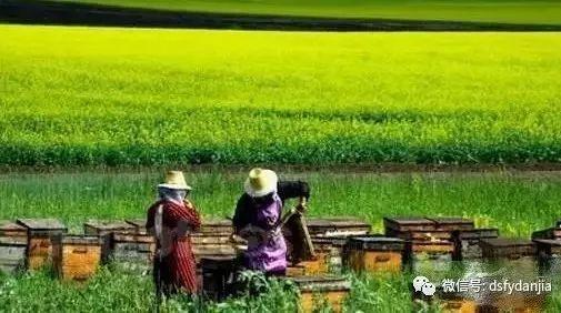 蜂蜜糖 玉米和蜂蜜能一起吃吗 蜂蜜的美容作用与功效 东北黑蜂蜂蜜价格 结石喝蜂蜜吗