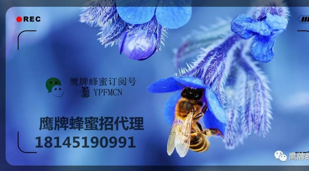 吃了葱多久能喝蜂蜜 蜂员外蜂蜜的价格 蜂蜜中兽药残留检测 什么体质的人不适合喝蜂蜜 蚕豆花炖蜂蜜