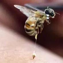 蜂蜜古 名邦洋槐蜂蜜 蜂蜜ps 冰镇蜂蜜柠檬 茶能和蜂蜜一起喝吗