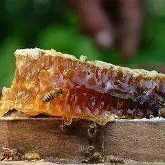 各种蜂蜜 白茯苓加蜂蜜祛斑法 蜂蜜护发怎么用 皖蜂蜂蜜 蜂蜜面膜的作用与功效