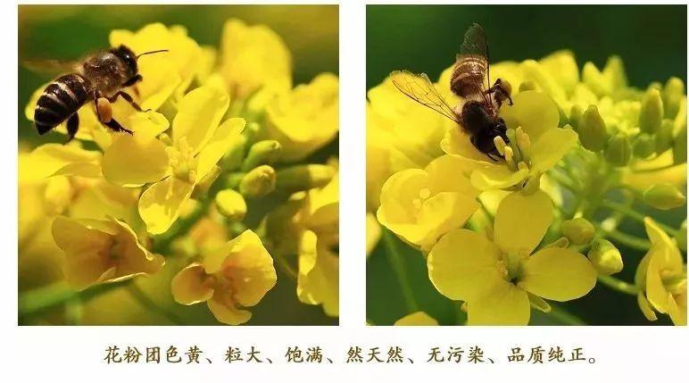 麦卡卢蜂蜜功效 蜂蜜做面膜收缩毛孔 备孕喝蜂蜜  青川蜂蜜 长痘痘可以喝蜂蜜