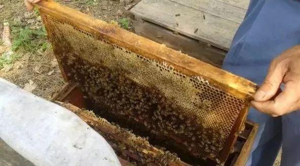 沈阳农业大学蜂蜜 蜂蜜的营养 洋槐花蜂蜜 野山蜂蜂蜜 蜂蜜疤痕