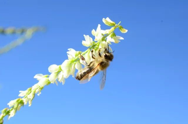 蜂蜜的储存温度 蜂蜜招商 蜂蜜祛斑方法 寄蜂蜜要怎么包装 蜂蜜变成红色