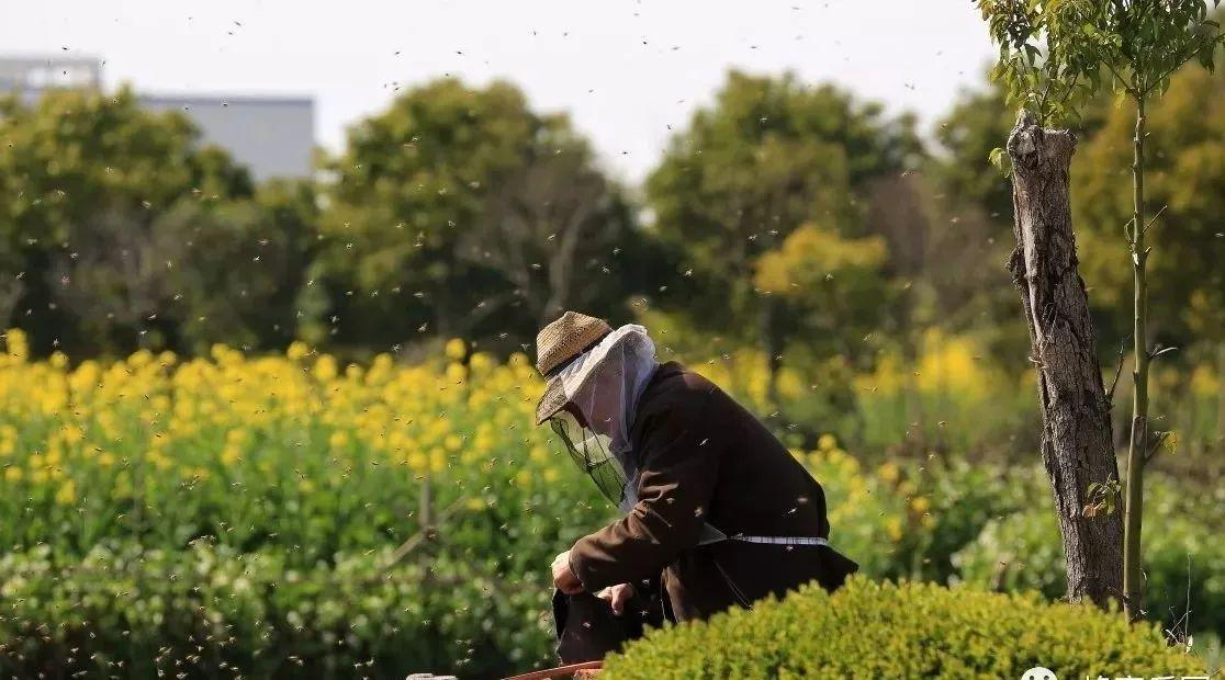 姜蒜苹果醋蜂蜜秘方 杏仁粉加蜂蜜 蜂蜜怎么卖 来事喝蜂蜜好吗 优质土蜂蜜
