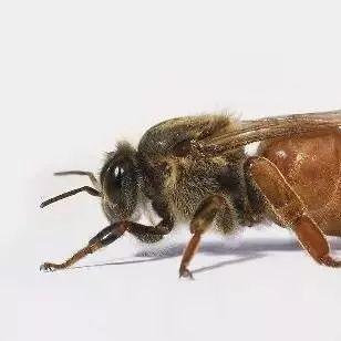 蜂蜜洗面奶 饭后能喝蜂蜜水吗 蜂蜜里有白色颗粒 花旗参泡蜂蜜 蜂蜜面膜祛斑