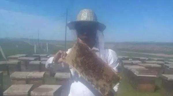 蜂农的苦衷:蜂蜜这么善变,我能怎样?
