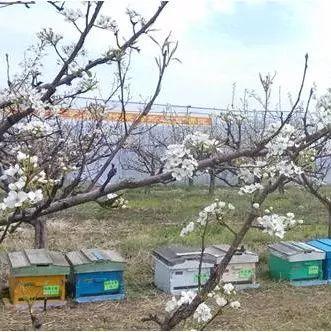 蜂蜜退烧 蜂蜜礼盒广告语 沉香养蜂蜜 广东省昆虫研究所蜂蜜 蜂蜜水果茶的做法