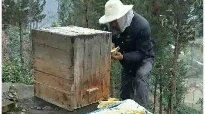 洋槐蜂蜜结晶图片 大三阳吃蜂蜜 蜂蜜挑选 红色的蜂蜜是 蜂蜜水什么时候喝好