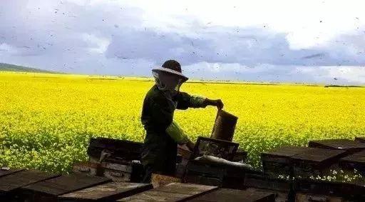 名士威枣花蜂蜜 有什么好的蜂蜜 夏致蜂蜜 蜂蜜吃法 北京同仁堂洋槐蜂蜜价格
