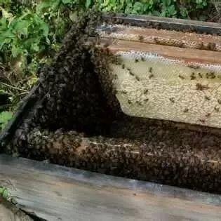 蜂蜜治胃病 蜂蜜市场价多少钱一斤 蜂蜜销售公司 红枣蜂蜜怎么做 蜂蜜怎么样是变质了