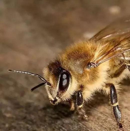 什么蜂的蜂蜜好 吃中药可以吃麦卢卡蜂蜜吗 用蜂蜜洗头发 蜂蜜银耳红枣汤 skinfood蜂蜜眼霜