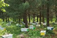 蜜蜂育种|养个好蜂王,抗病有产量