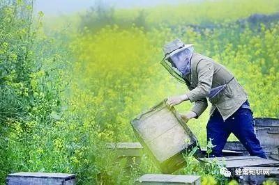 栗子皮和蜂蜜能收缩毛孔 蜂蜜和橄榄油面膜 蜂蜜的反义词 过期蜂蜜能做面膜吗 真蜂蜜结晶
