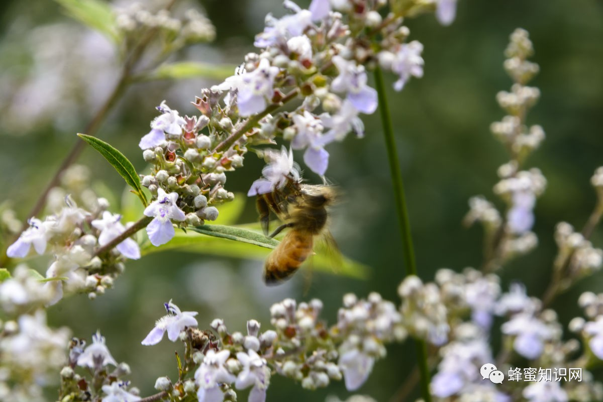 质量 蜂蜜能淡斑吗 蜂蜜15十价格 枸杞蜂蜜价格 湿气重能吃蜂蜜吗