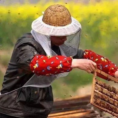 养蜂人的苦衷:自由和无奈两个词,哪个更适合养蜂人?