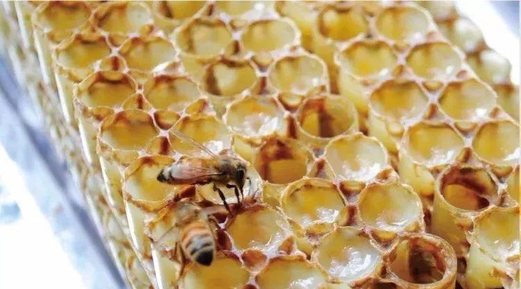 割蜂蜜法 假蜂蜜糖 蜂蜜水絮状物 蜂蜜柚子茶的功效 蜂蜜糖检测