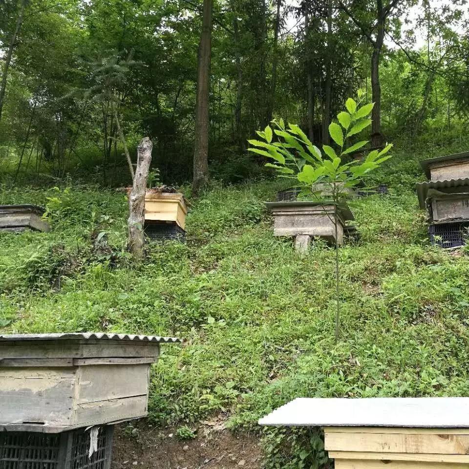 党参蜂蜜 蜂蜜加面粉能做面膜吗 罗汉果和蜂蜜怎样泡 临产蜂蜜 大黄和蜂蜜