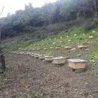 儿童吃蜂蜜会早熟吗 蜂蜜结晶图 什么样的蜂蜜养颜 蜂蜜店面 什么蜂蜜可以做面膜