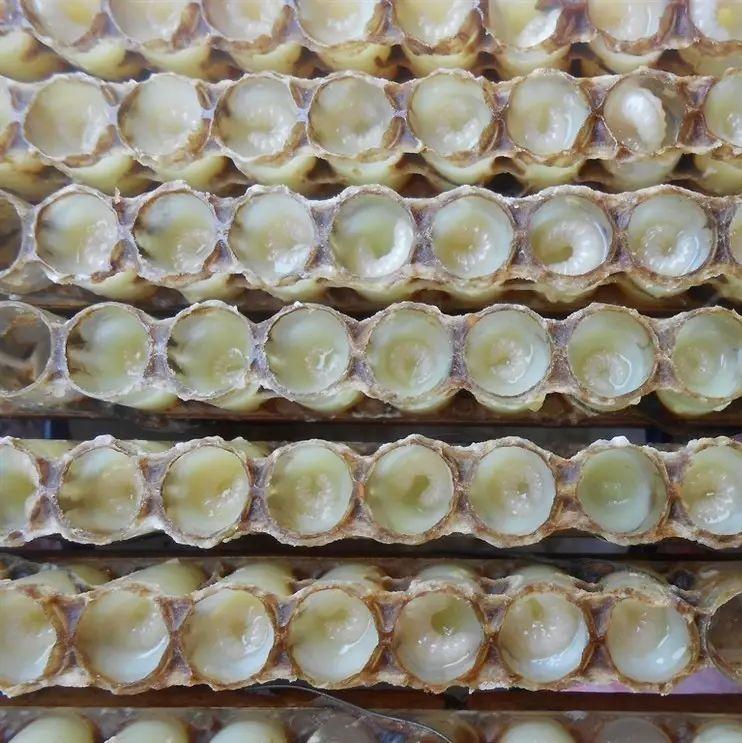 冬季喝哪种蜂蜜好 智仁洋槐蜂蜜礼盒装 蜂蜜费用 蜜爱蜜的蜂蜜是真的吗 恩施蜂蜜
