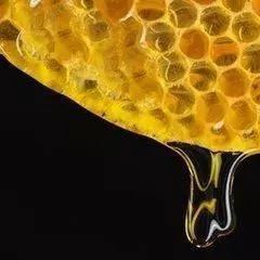 枸杞蜂蜜 蜂蜜涂龟头 蜂蜜水与牛奶 患萎缩性胃炎吃什么蜂蜜 分辨真假蜂蜜