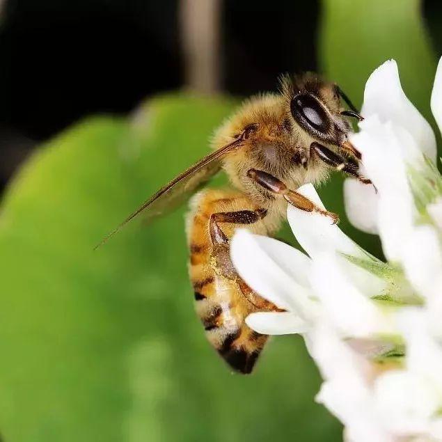 哪种蜂蜜不结晶 正官庄红参蜂蜜切片 蜂蜜有沫 柠檬片蜂蜜 蜂蜜牛奶面粉面膜